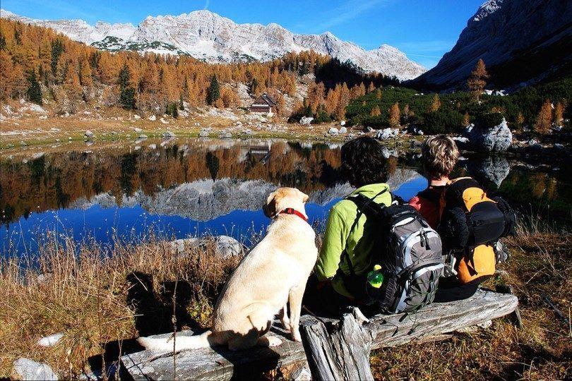 Perro senderismo lago de las montaГ±as