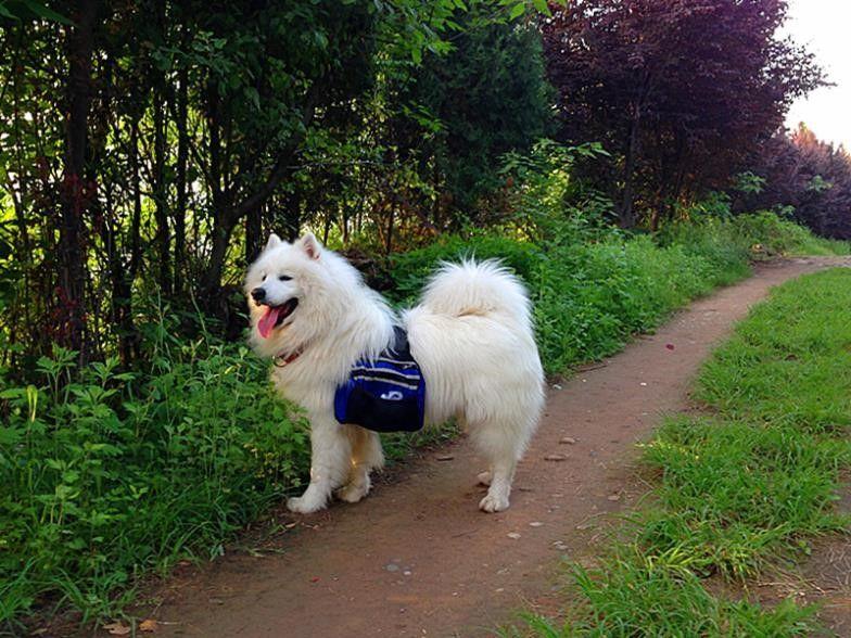 Perro mochila en la naturaleza