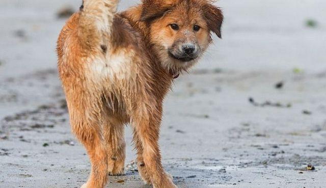 Debilidad extremo trasero en perros: sus causas y sus soluciones