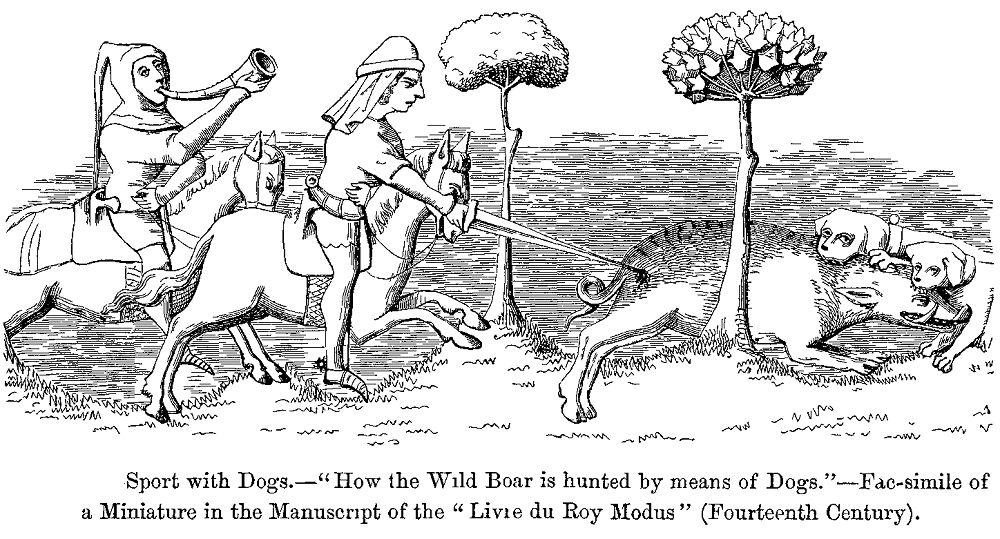 Hog perro de caza