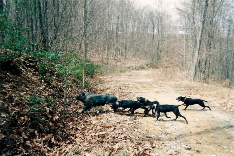 entrenamiento del perro de captura