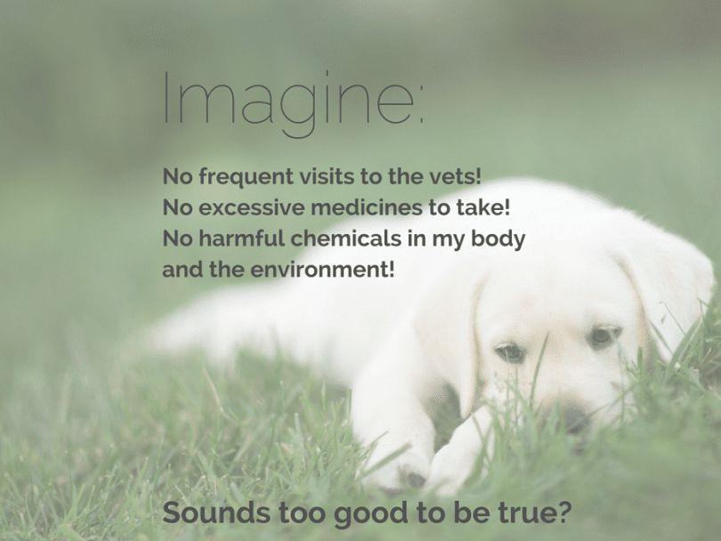 La medicina holística para perros: ¿es realmente funcionando?