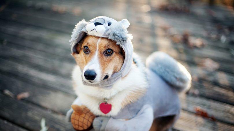 perro traje