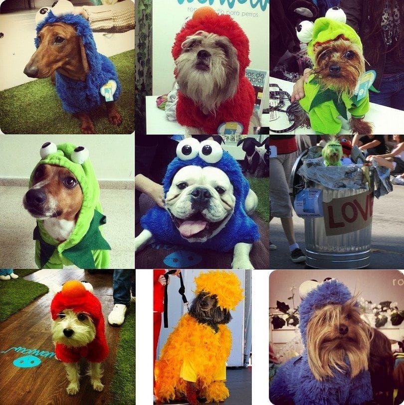 Perros con trajes