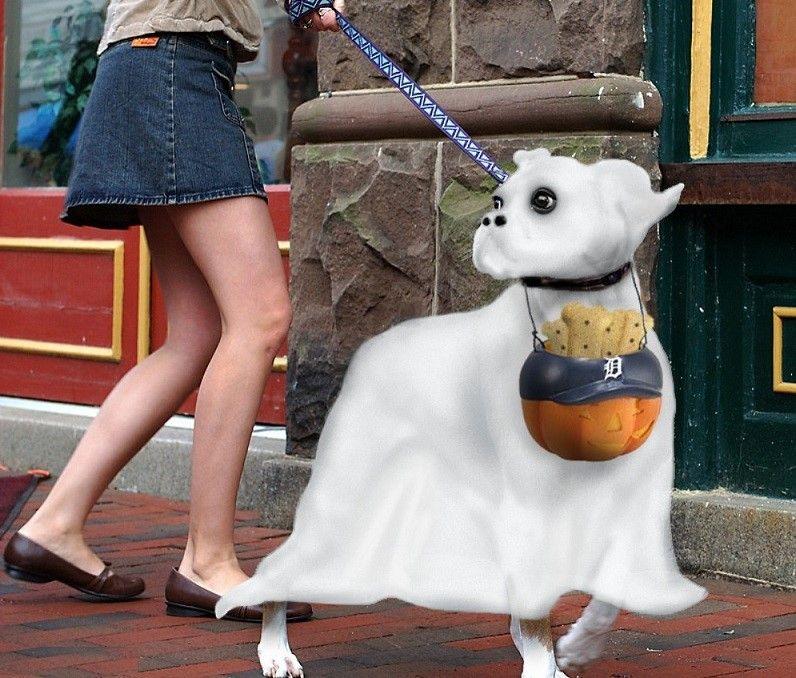traje del perro fantasma