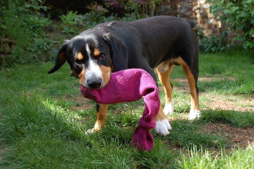 Casera perro juguetes: un costo libre y respetuoso del medio ambiente solución para su amigo