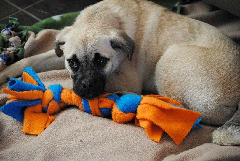 Cachorro de perro de juguete y casera