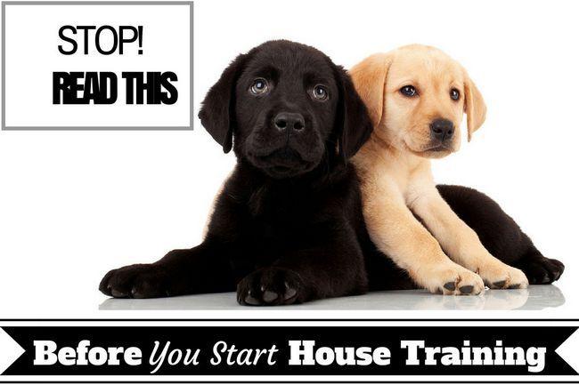 Entrenamiento de la casa: necesidad básica para conocer los hechos antes de iniciar