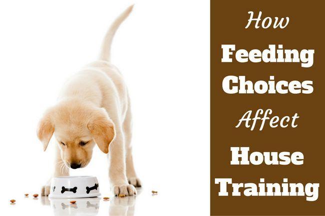 Entrenamiento de la casa: las alternativas de alimentación hacen una enorme diferencia