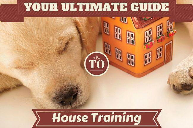 entrenamiento de la casa - una foto de un cachorro de laboratorio que duerme cerca de un modelo de casa