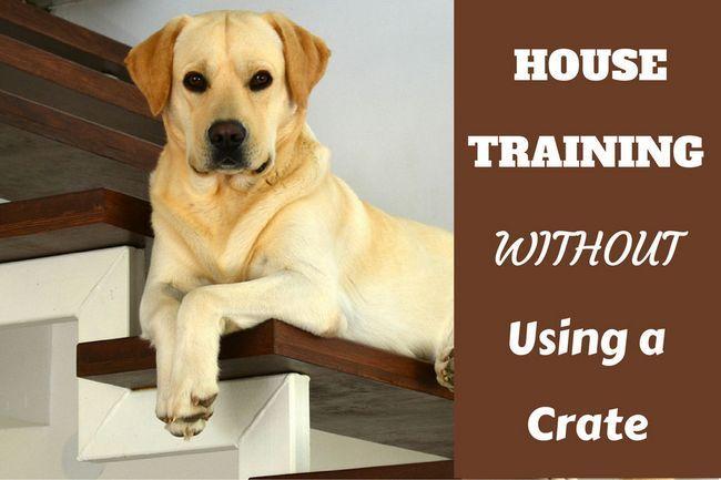 entrenamiento de la casa sin un cajón - Un laboratorio que se enfría en unas escaleras