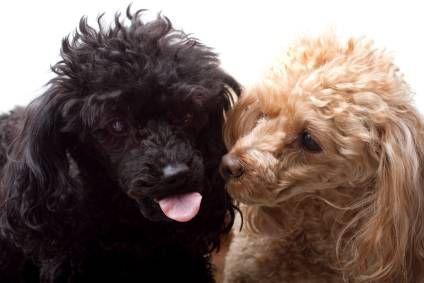 ¿Cómo elegir un compañero perros?