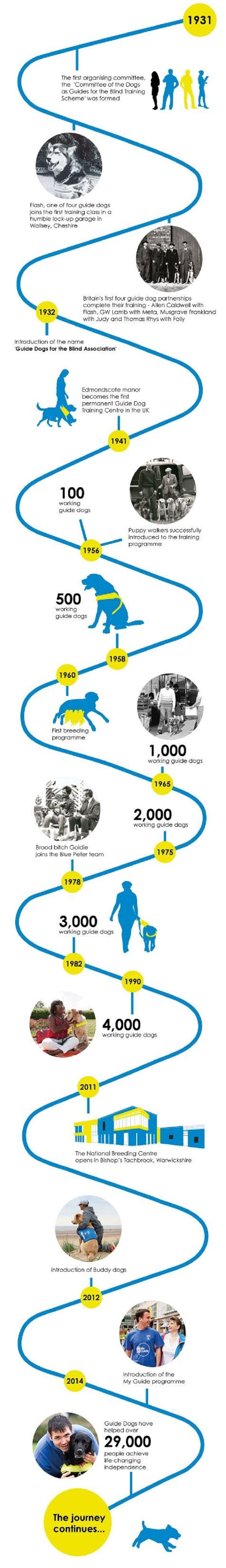 Los perros guía infografía