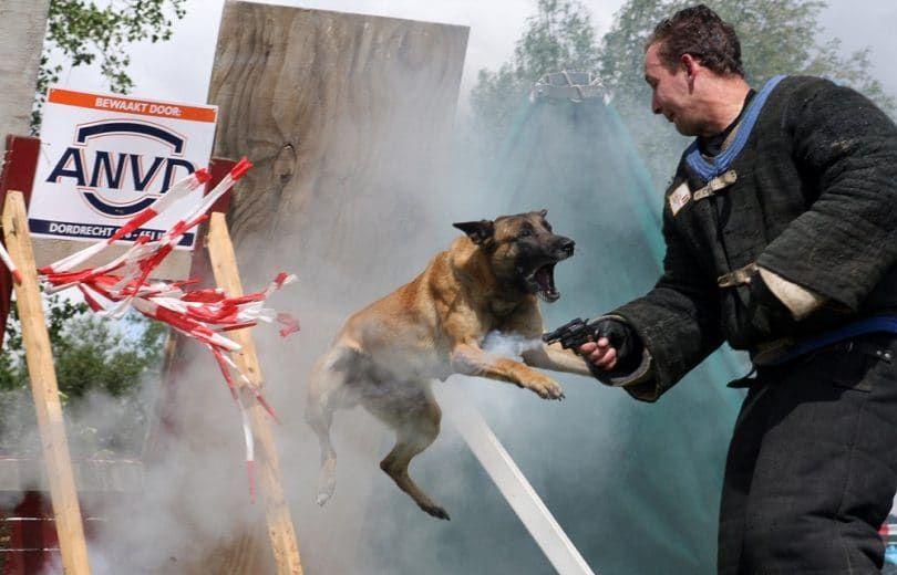 Perro de policía que ataca