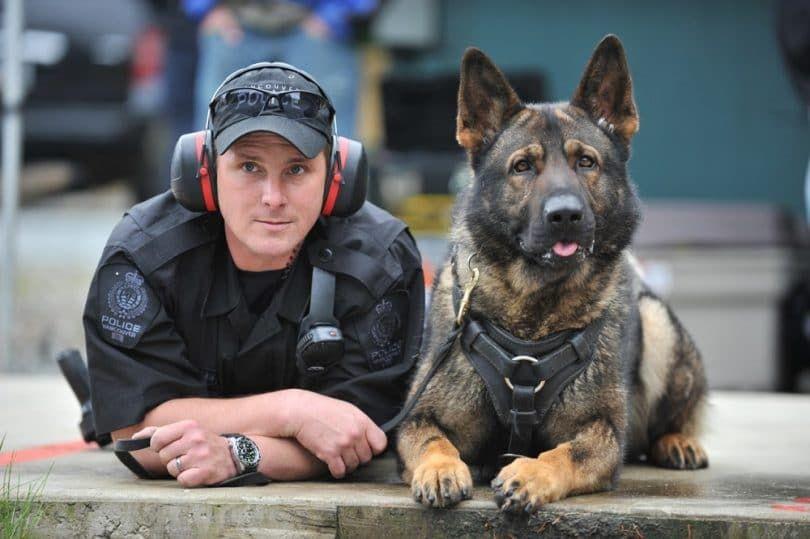 Handler y un perro