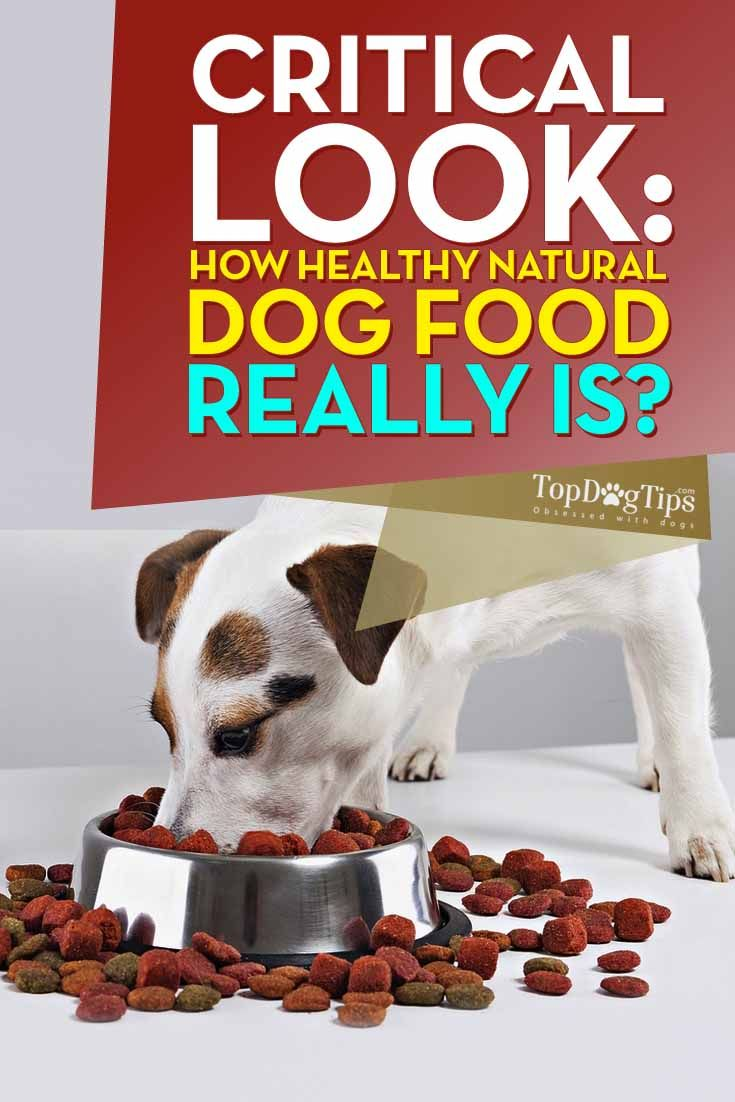 Es comida para perros natural y saludable