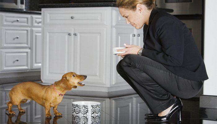 ¿Cómo natural sano del alimento de perro realmente es