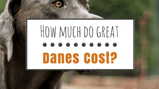 ¿Cuánto cuestan los grandes daneses?
