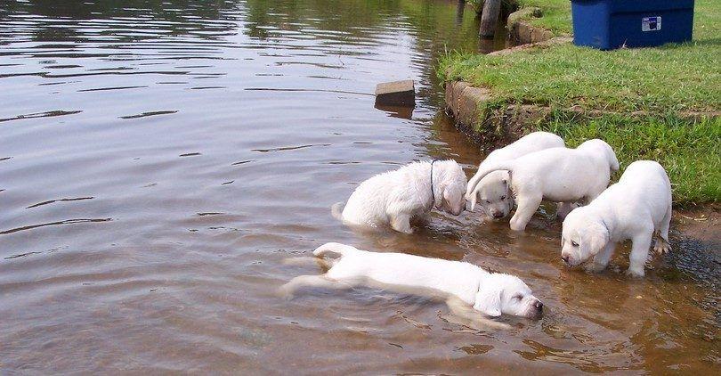cachorro y el ejercicio de juego
