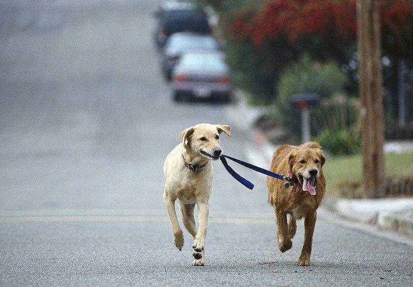 perros que se ejecutan