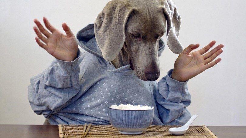 ¿Cuánto debo alimentar a mi perro: ¿realidad vs. Ficción