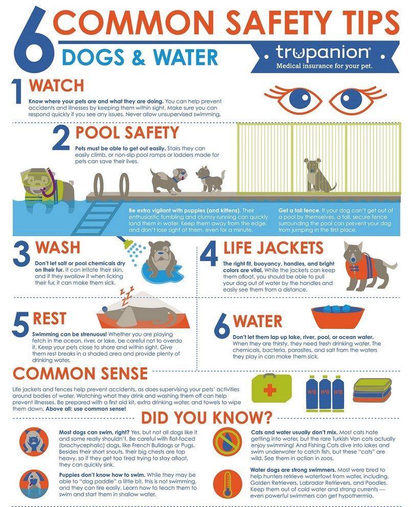 Perro y agua Infografía