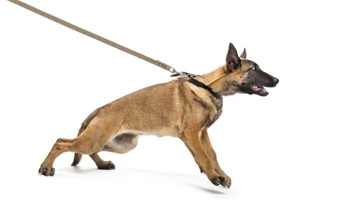 ¿Por qué n-pull para perros Arneses y collares de cabeza son la única solución