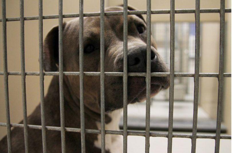Perro triste waithing para su adopción