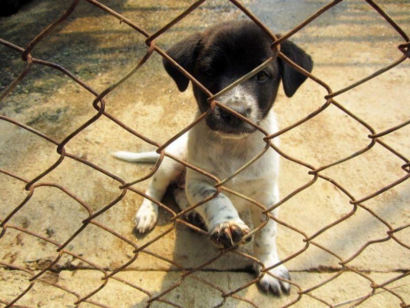 Ejecución de los refugios para perros