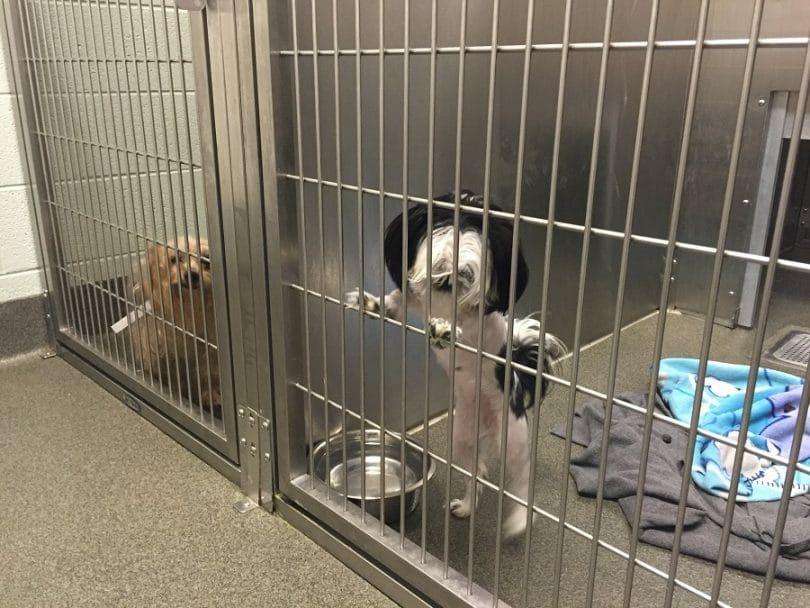Perros en el refugio para perros