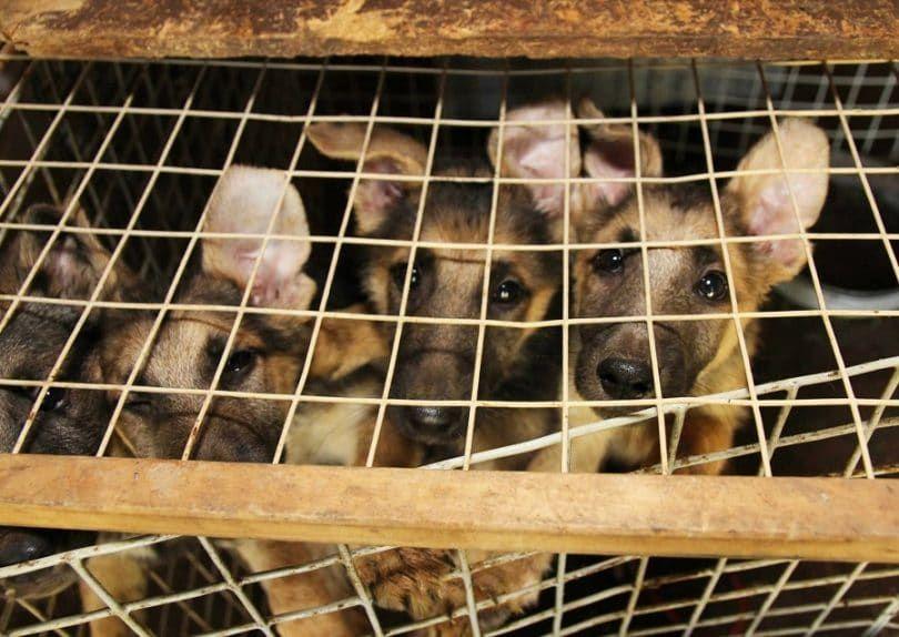 Cachorros en la jaula en el refugio