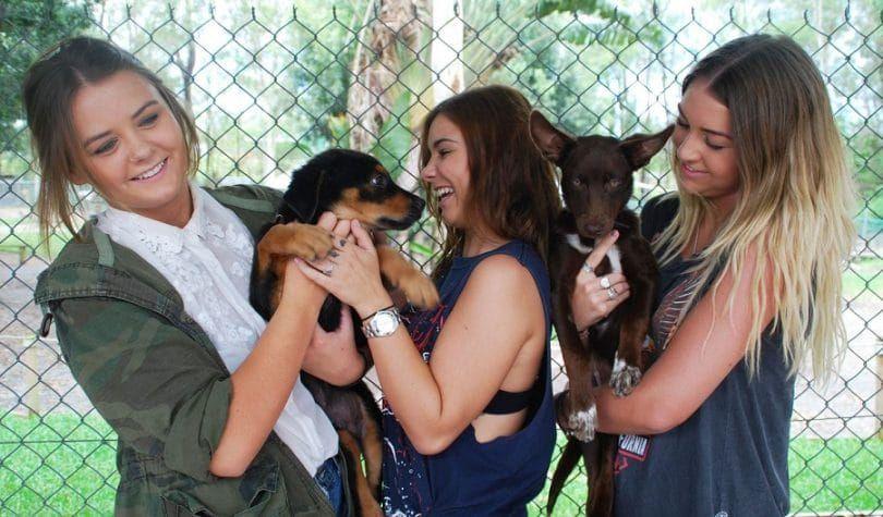 niñas proceso de adopción de perros que quieren un cachorro