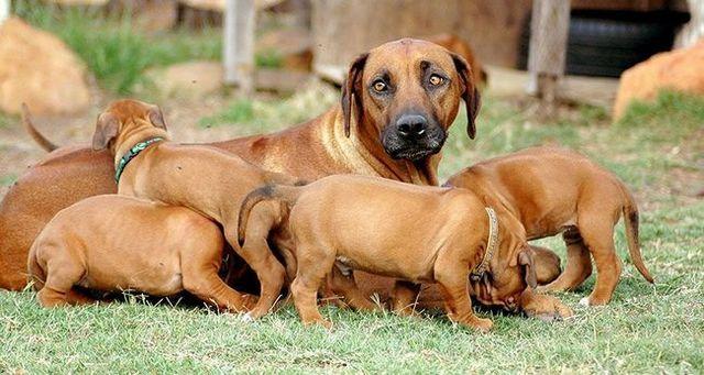 ¿Cómo evitar las fábricas de cachorros