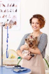 peluquero profesional de perros con una mascota