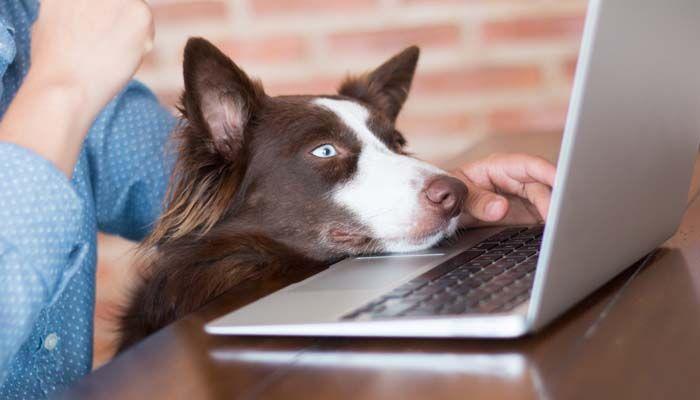 cursos de preparaciГіn del perro en lГnea