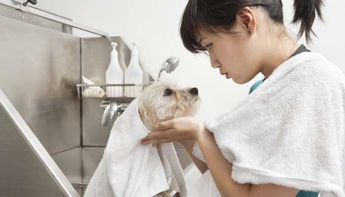 cГіmo convertirse en un peluquero de perros en los Estados Unidos