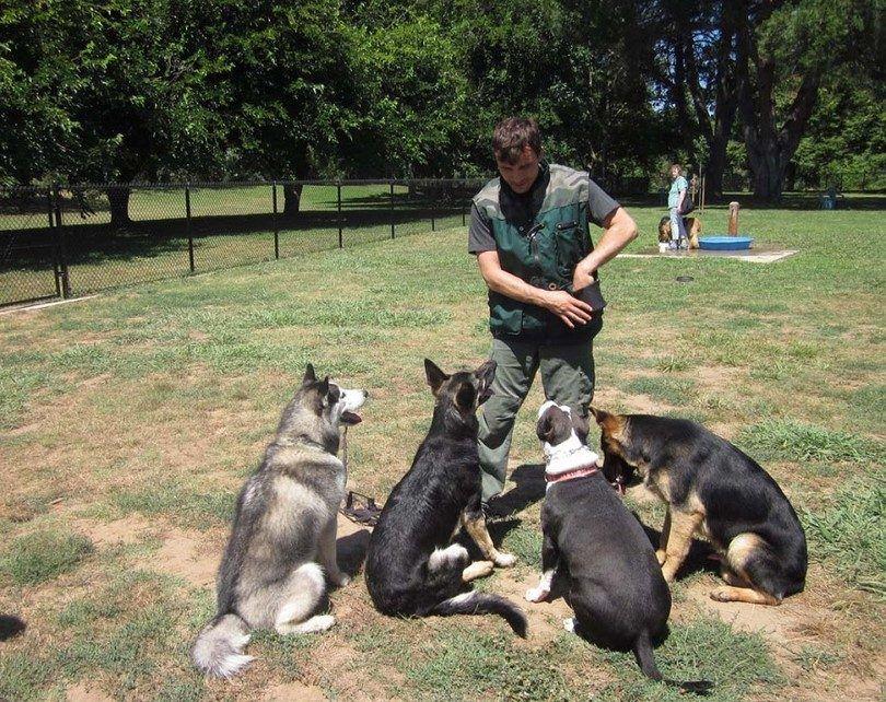 Cómo convertirse en un entrenador de perros: instituciones, actividades y certificaciones