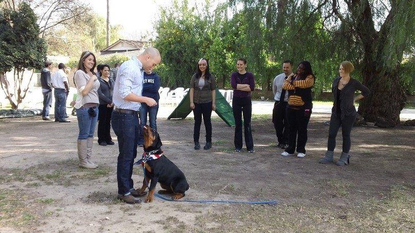 entrenador de perros con un perro
