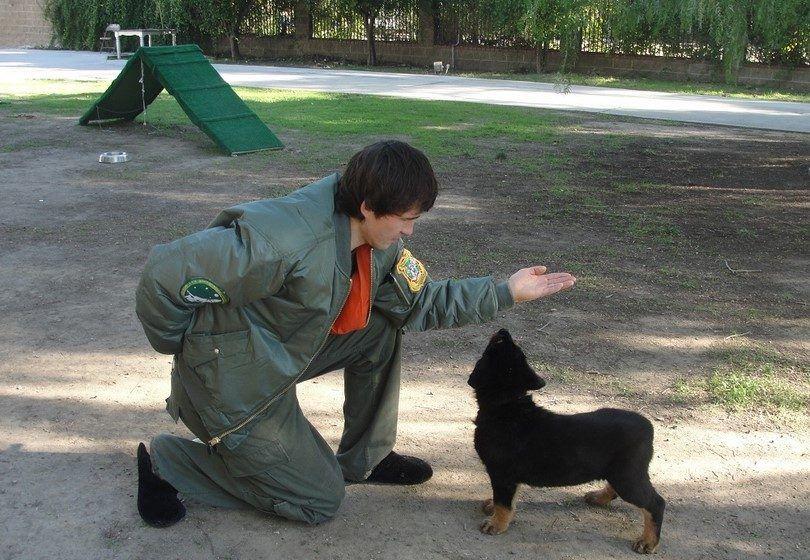 entrenamiento del perro mutilante privadas
