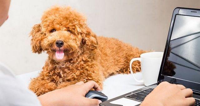 Cómo llevar su perro al trabajo