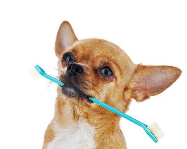 Cómo cepillarse los dientes de su perro