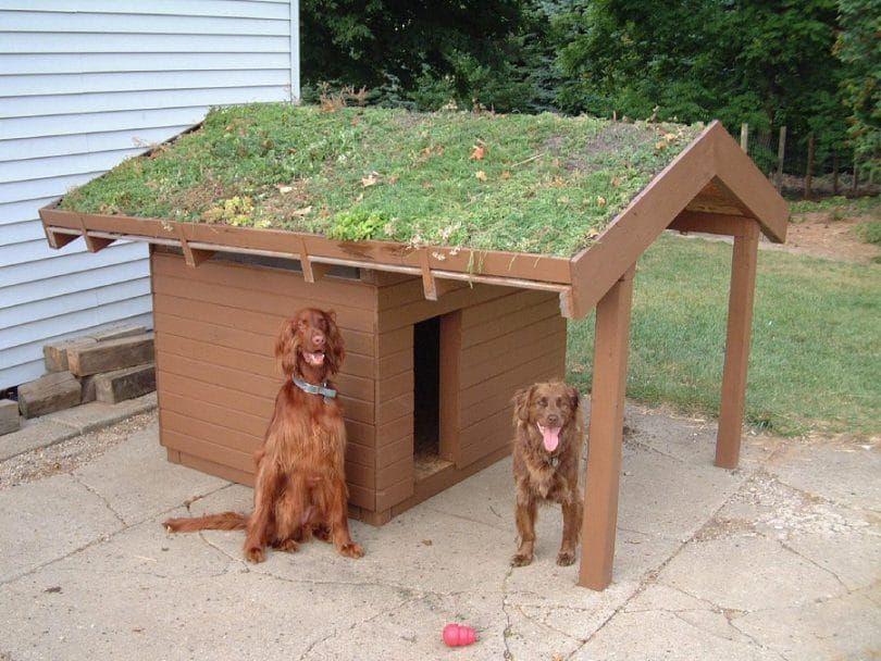casa casera para perros