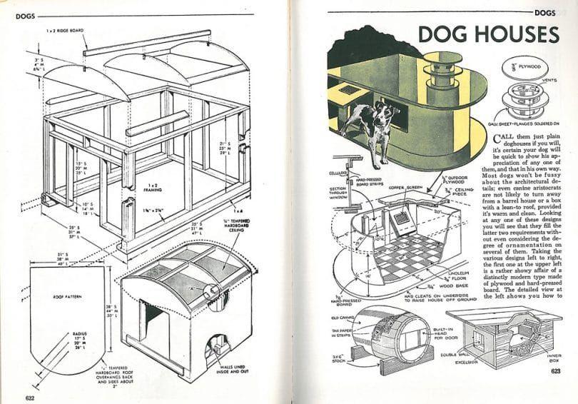 casas de perro infografГa