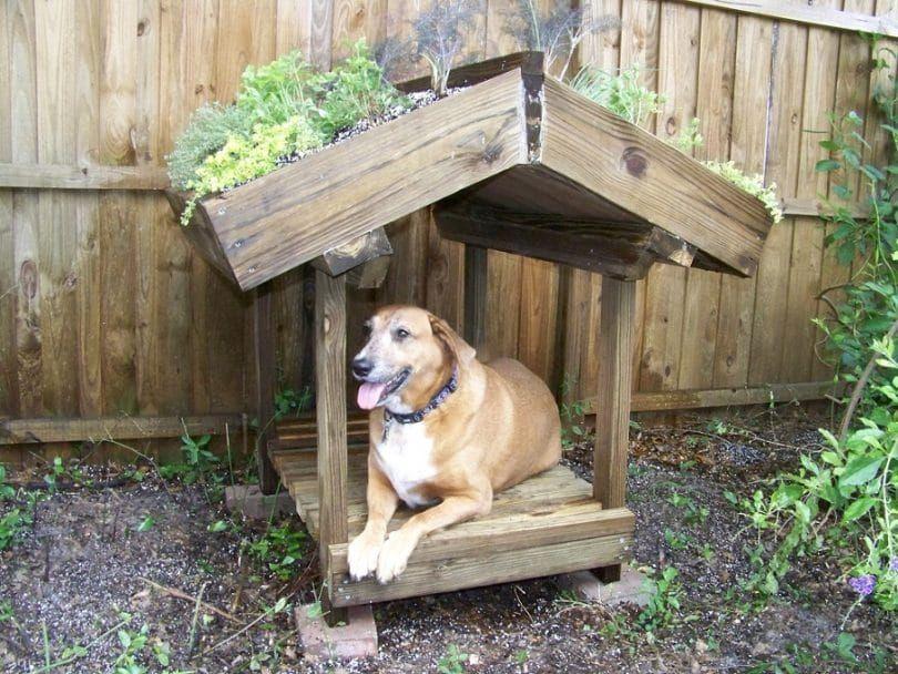 piso elevado en la casa del perro