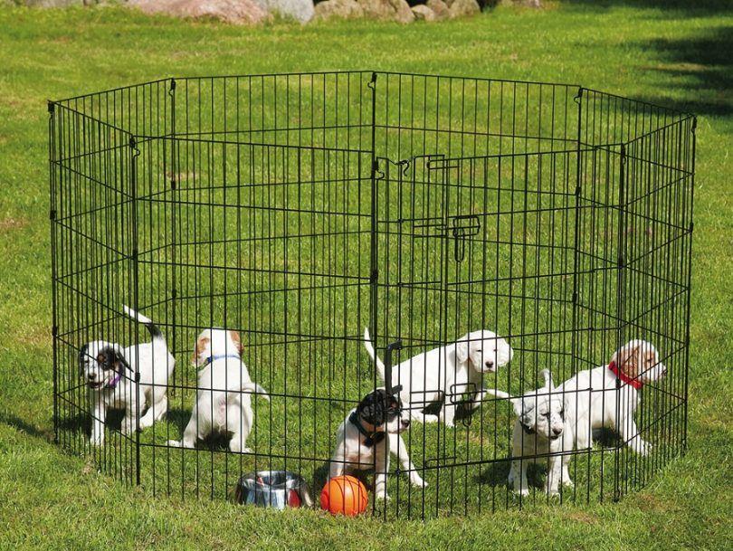 ¿Cómo construir una pluma perro: una guía paso a paso para principiantes