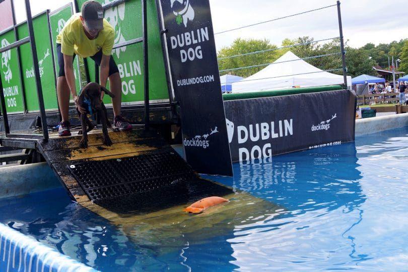 rampa de perro para la piscina