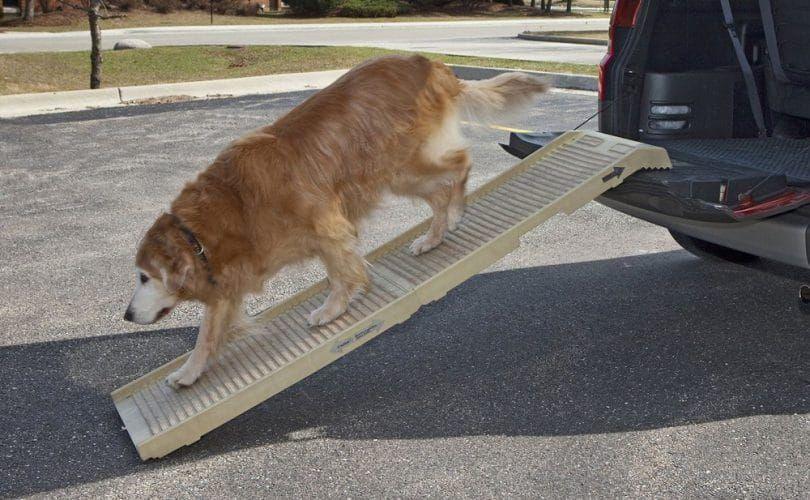 Construir una rampa de perro