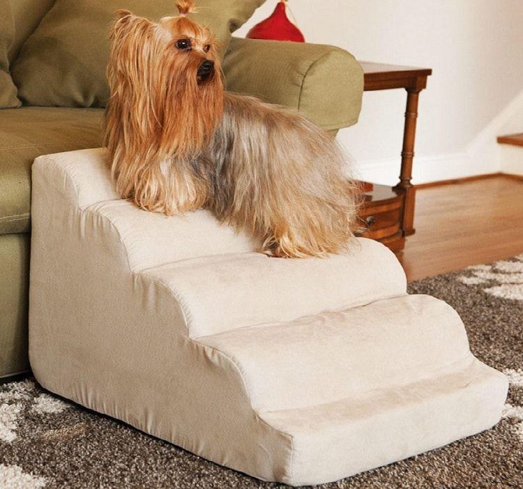 Hacer escaleras para su perro