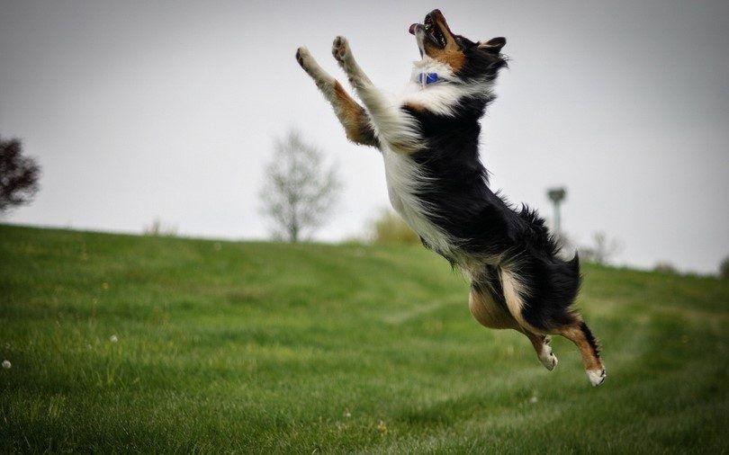 Cómo calmar a un perro: soluciones naturales y trucos eficaces