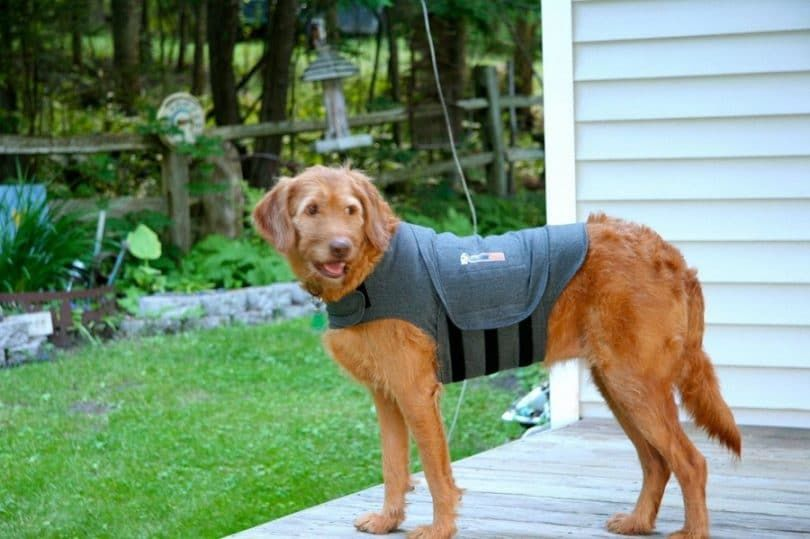 Chaqueta perro Thundershirt para la ansiedad